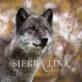 wolf wildlife animal photography