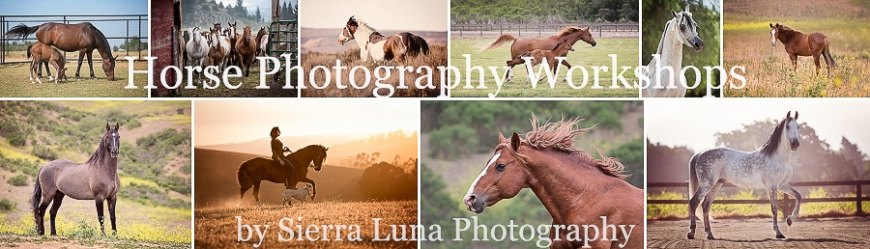 horse photography workshops by sierra luna photography header