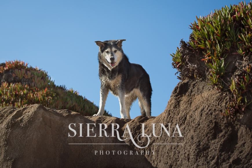 senior dog photography placerville