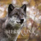 wolf wildlife animal photography