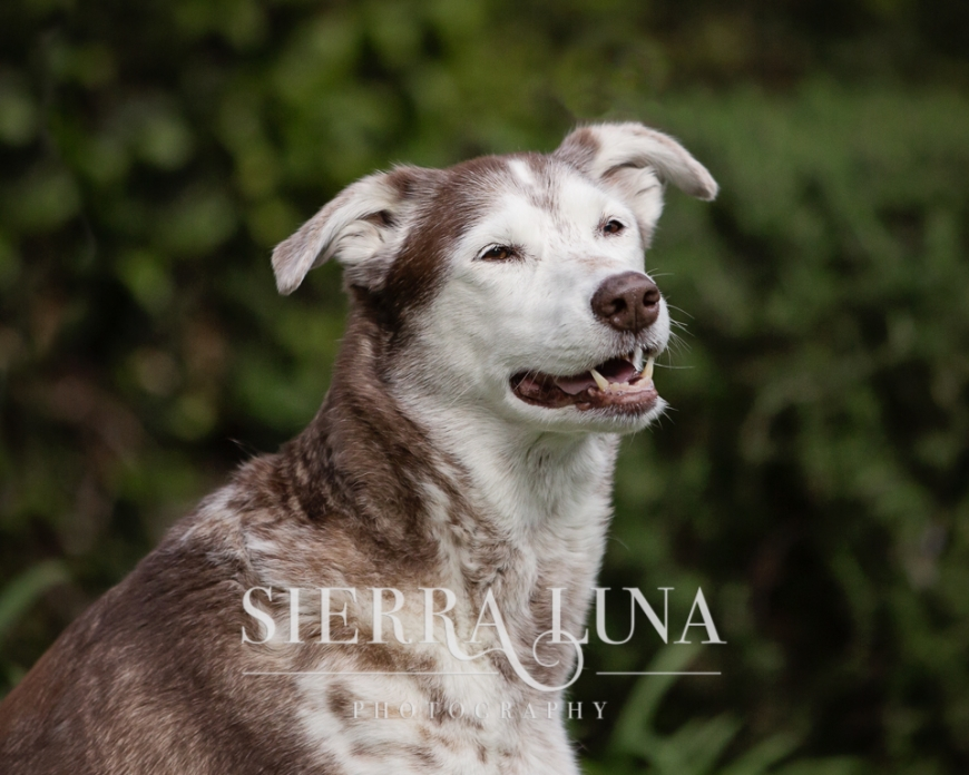 Tonka glamour shot